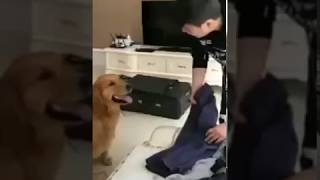 Touching Video - Dog don't want to leave his owner