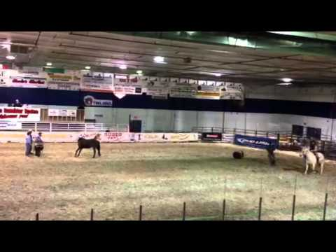 Tisdale ranch rodeo - wild horse race