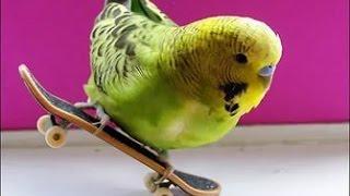 попугай танцует под музыку !A parrot dancing to the music!