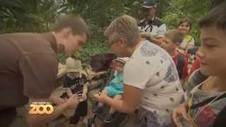 Une saison au zoo - Episode 5 (Saison 4)