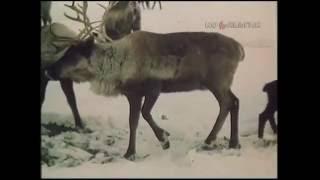 В мире животных Выпуск 1984 г