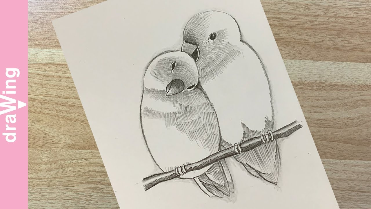 how to draw two birds in love / 새 그리는 방법