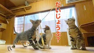 【保護猫】ひもに夢中な猫たちが可愛い♪