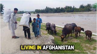 village life | Afghanistan | Rural life of Afghanistan | Simple life | 2020 | HD