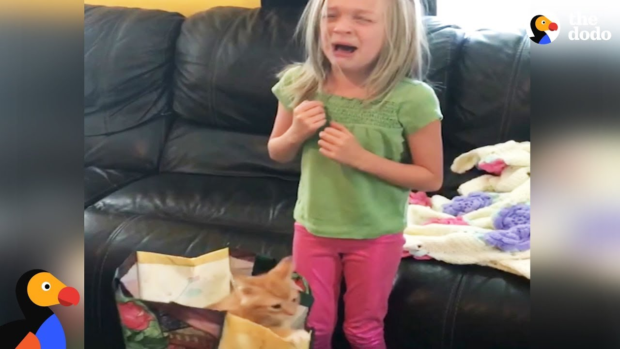 Girl Gets Kitten Surprise For Her Birthday