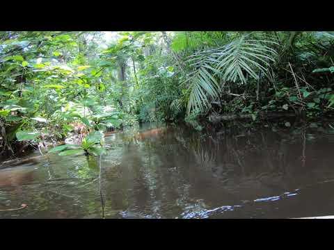 Tributary of the Chiloango River, Cabinda, Angola