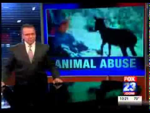 Animal abuse  in Algeria.