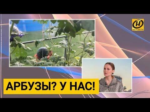 Как не загубить урожай? Роль метеорологов в посевной