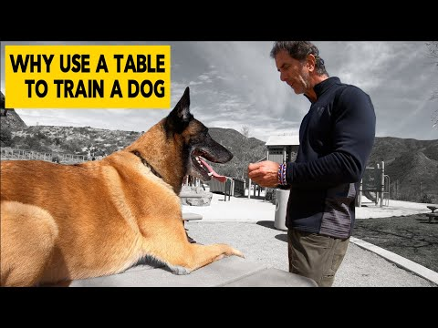 Why Use a Table to Train Your Dog - Robert Cabral Dog Training Video