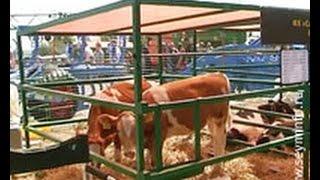 Качественные корма для животных - неотъемлемая часть аграрных успехов