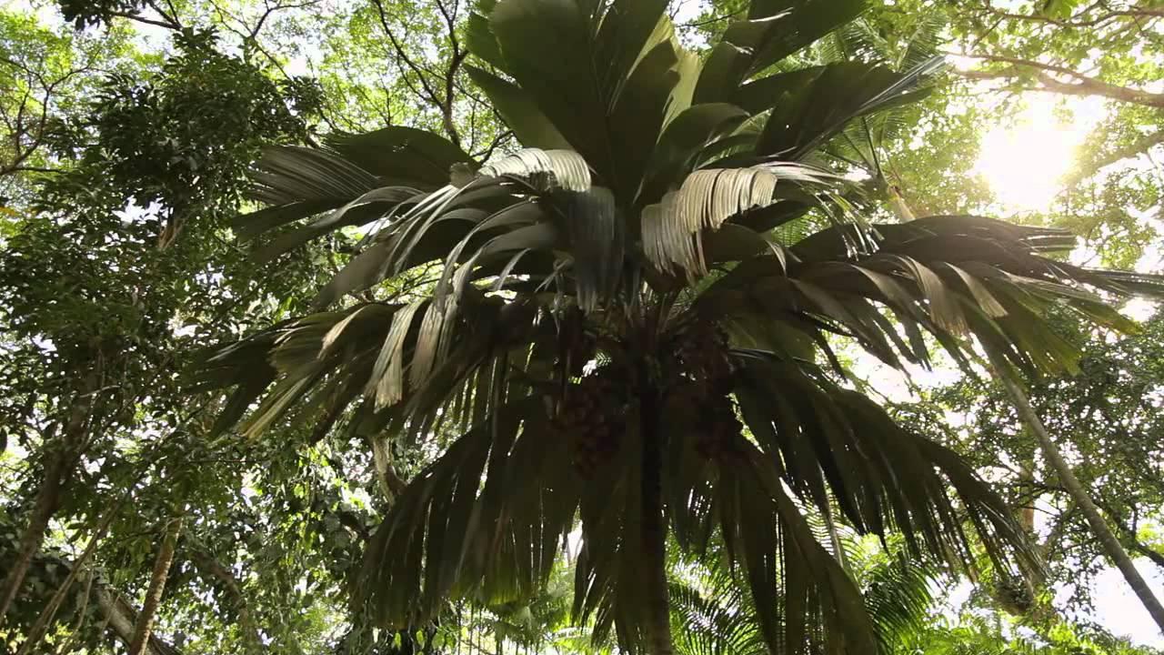 Palm Trail - McBryde Garden - National Tropical Botanical Garden ...