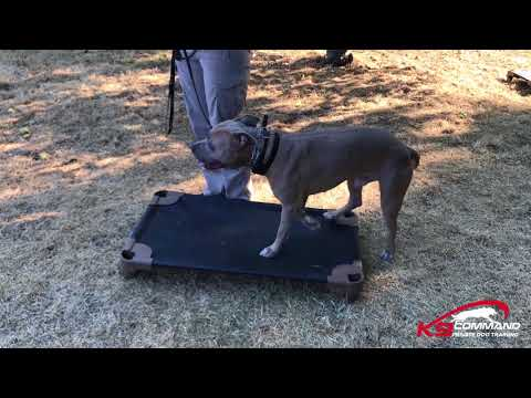 Teaching Place Command for a Dog | K9 Command Seattle, WA.