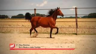 17 Elisa Butcher (v. SJ