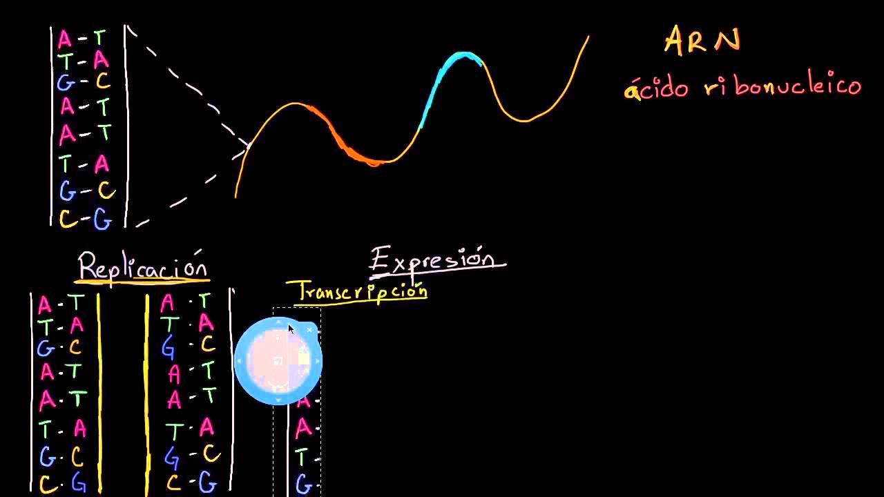 Replicación Del Adn Y Transcripción Y Traducción Del Arn