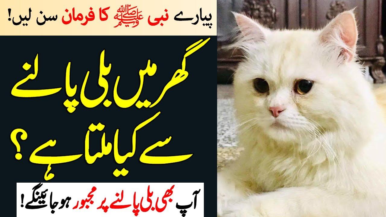 According To Islam How Is A Cat Reared In A Home Gar Main Bili Palna Kesa Hai Islamic Teacher Youtube
