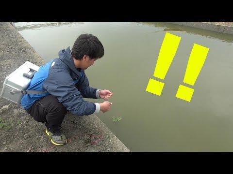 「どんな魚でも」自分の仕掛けに釣れたら自分で捌いて食う企画