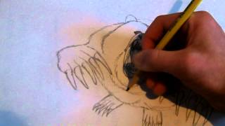 how to draw a grizzly bear