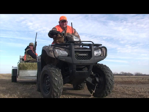 4 Pheasant Hunting In The Aberdeen, South Dakota Area