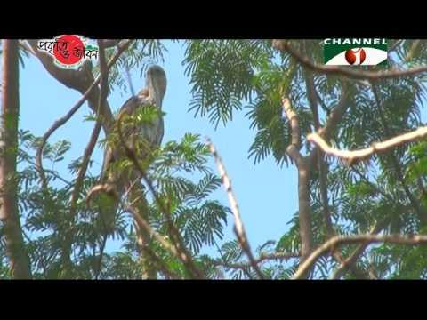 Nature and Life - Episode 158 (Birds of Sundarbans)
