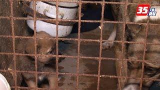 """Спасите """"СПАС"""": череповецкий приют для животных затопило талыми водами"""