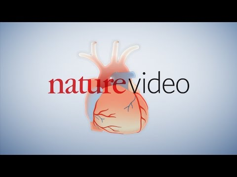 Nature   Warfarin medical animation