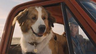 Подорож хорошого пса. 13 червня у кіно