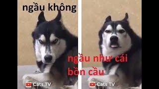 cats tv | tik tok chó mèo dễ thương cute nhất thế giới loài người