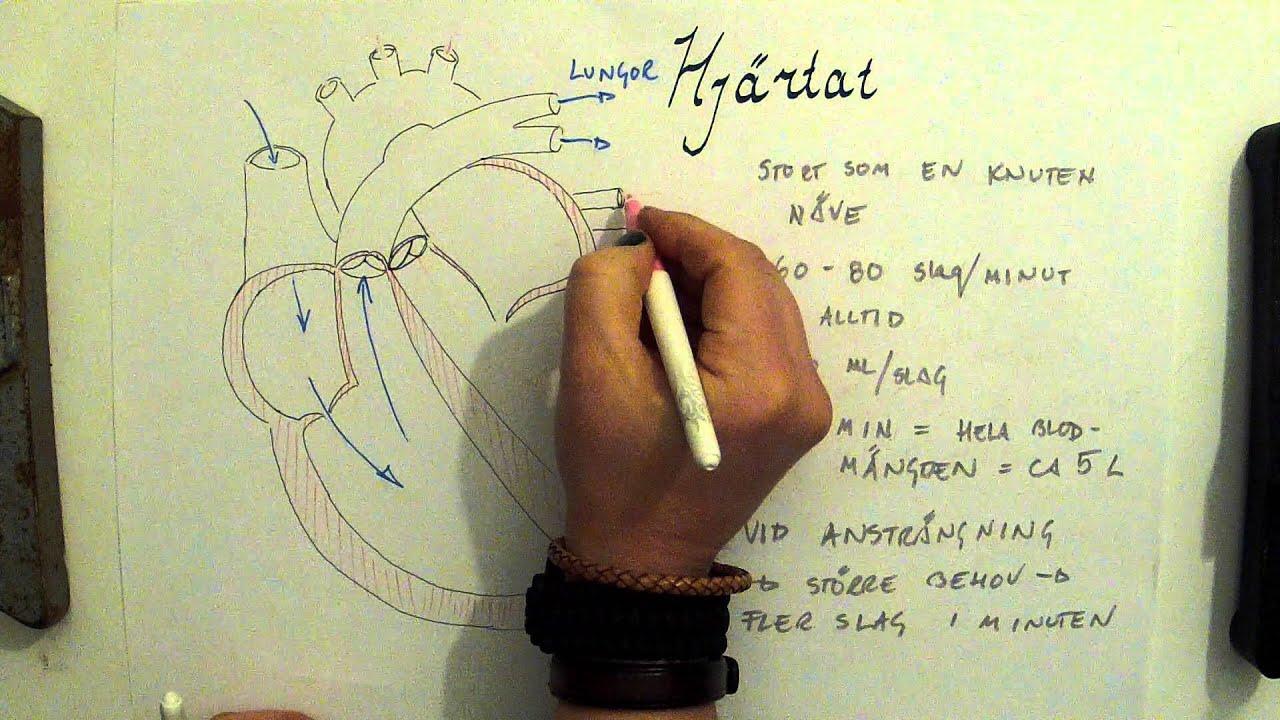 Biologi Kroppen - Blodet 1 - hjärta, blodkärl och blodkroppar