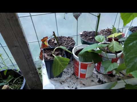 Last batch of greenhouse plants for sale, Seattle