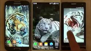 Tiger live wallpaper for android phones and tablets