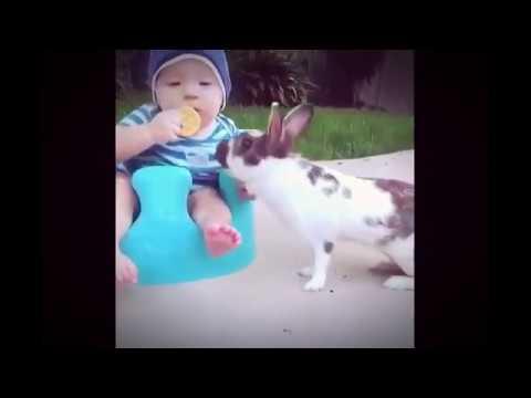 Binatang Saja Ngerti, Apalagi Kamu ( Funny )