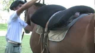 Gaucho Horse Saddling
