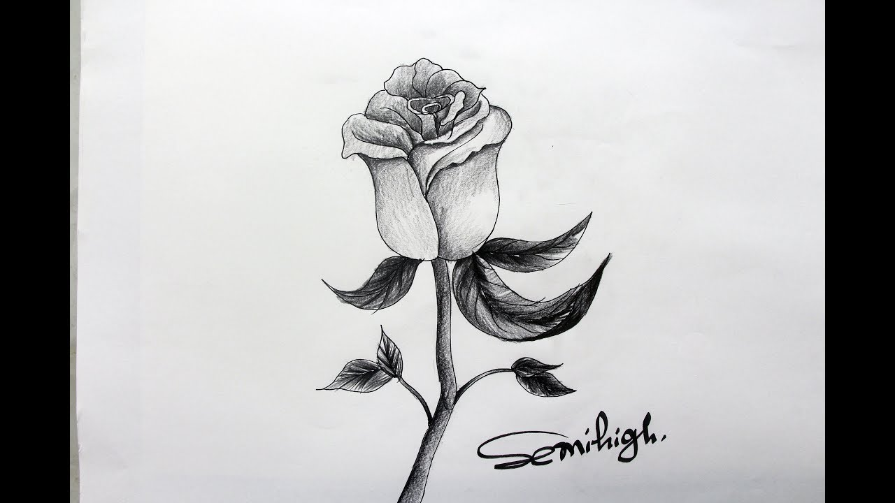 How To Draw A Realistic Rose Step By Step For Beginners ...