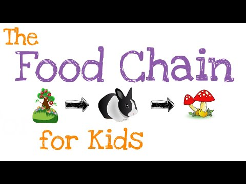 The Food Chain for Kids