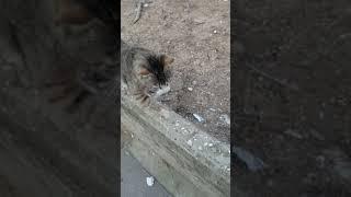 Няшный кот мяукает. Cute Cat Meow. Lustige Katzen. Kucing Lucu. Gatos Graciosos. Chats Drôles. 面白い猫