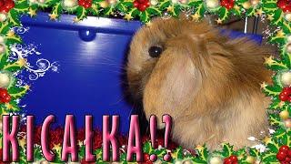 [VLOG] Domek dla królika