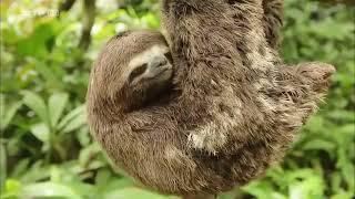 In den Wäldern Perus [Tier Doku]