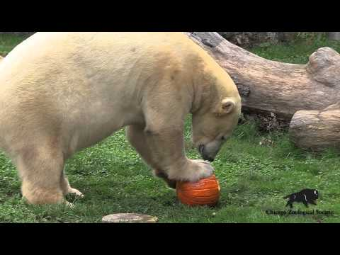 Halloween Pumpkin Treats at Brookfield Zoo