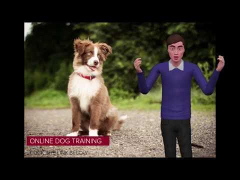 Best Online Dog Training