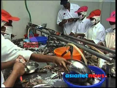 Kerala seafood exports : Money Time 30th June 2013 Part 4മണി ടൈം