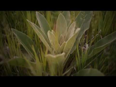 Jeremy Cunningham Quartet Album Trailer