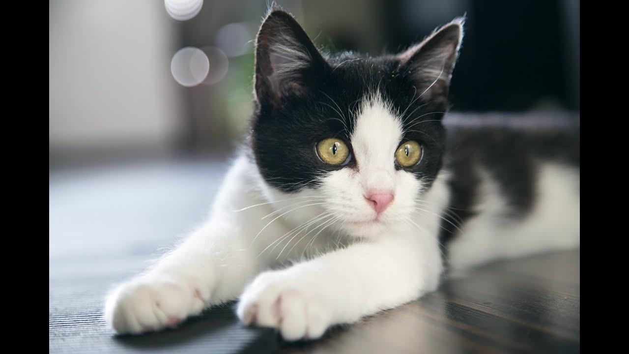 Что делать чтобы кот не мурлыкал