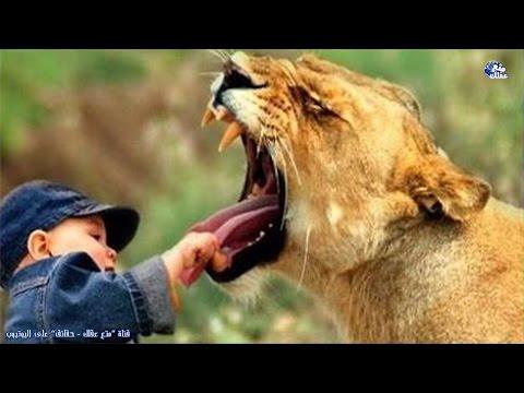 حقائق عن الحيوانات ظننا لسنوات أنها حقيقية وهى خاطئة !!