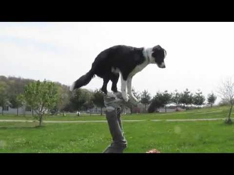 Amazing dog trick-footstall