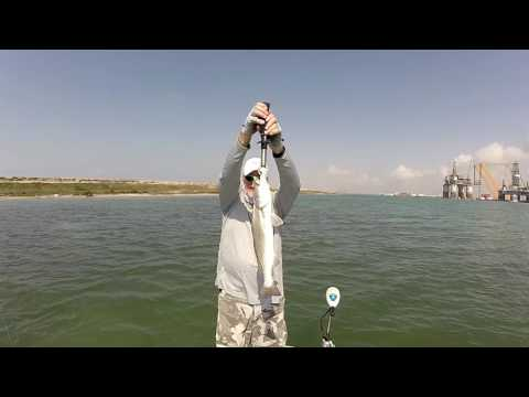 More Gold Spoon Flutter Fishing For Speckled Trout