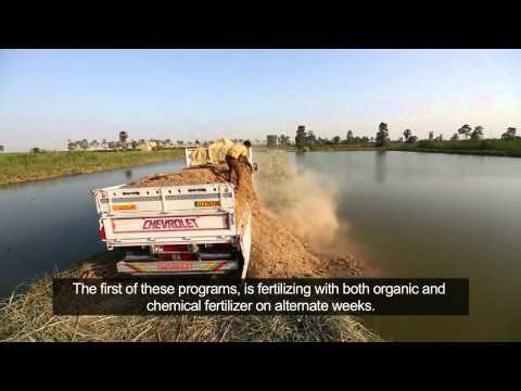 Fish Pond Fertilization