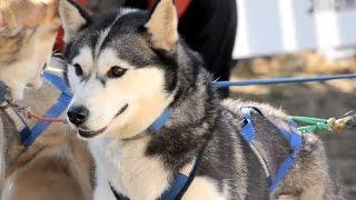 Born to Run: Dryland Dog Mushing / Carting National Championship