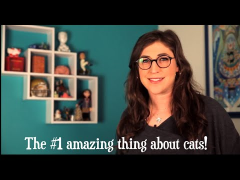 5 Amazing Things About Cats! - YouTube