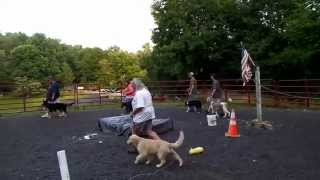 Walnut Ridge Farm Dog Obedience And Agility Class
