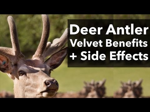 Deer Antler Velvet and Deer Antler Spray Benefits & Side Effects
